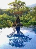 Reflexão de buddha da associação Após a foto da manhã da chuva imagem de stock royalty free