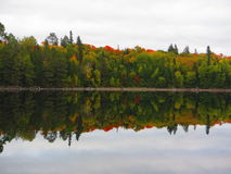 Reflexão de cores da queda Fotos de Stock Royalty Free
