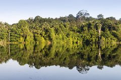 Reflexão de espelho da flora e das árvores na água imóvel fotos de stock