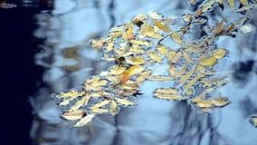 Reflexão de silhuetas pretas de troncos de árvore na superfície da água video estoque