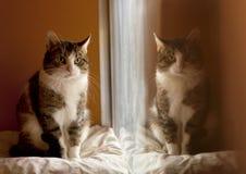 Reflexão de um gato Imagens de Stock Royalty Free