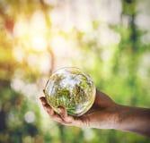 Reflexão de uma floresta na bola de vidro guardada à disposição fotografia de stock royalty free