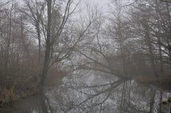 Reflexão desencapada das filiais, rio do adda foto de stock