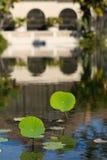Reflexão do jacinto Imagem de Stock Royalty Free