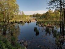 Reflexão do lago (a KlaipÄ-Dinamarca condado, Lituânia) Foto de Stock