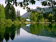 Reflexão do lago lavender Imagem de Stock