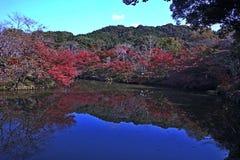 Reflexão do lago no outono Fotos de Stock