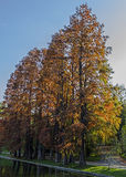 Reflexão do outono Fotos de Stock