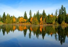 Reflexão do outono Imagem de Stock