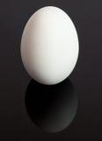 Reflexão do ovo Imagens de Stock