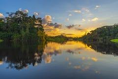 Reflexão do por do sol da floresta úmida das Amazonas, Equador fotografia de stock