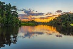 Reflexão do por do sol na floresta úmida das Amazonas foto de stock