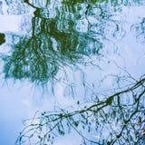 Reflexão do ramo de árvore na superfície da água Fotos de Stock