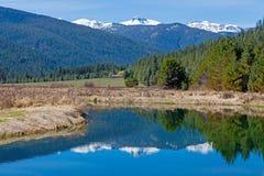 Reflexão do rio de Bull Foto de Stock Royalty Free