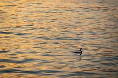 Reflexão do sol na água e no cormorão no mar fotografia de stock