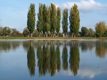 Reflexão dos poplars Imagens de Stock Royalty Free