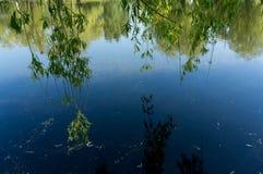 A reflexão dos ramos do céu e do salgueiro na água surge Imagem de Stock