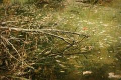 Reflexão dos ramos do lago autumn na água Fotografia de Stock