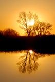 Reflexão dourada do Riparian foto de stock