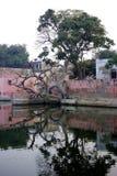 Reflexão impressionante da árvore velha Imagens de Stock