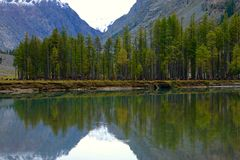 Reflexão impressionante das árvores Imagens de Stock Royalty Free