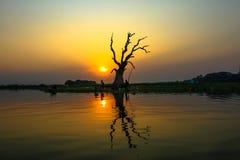 Reflexão inoperante da árvore imagens de stock royalty free
