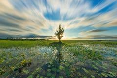 Reflexão macia do fundo da paisagem do foco no lago Fotos de Stock