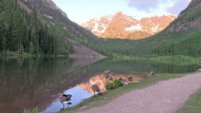Reflexão marrom de Bels e gansos Aspen Colorado video estoque