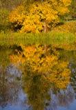Reflexão na água a árvore com folhas amarelas foto de stock royalty free