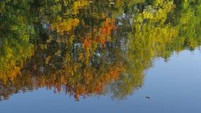 Reflexão na água filme