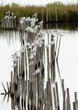 Reflexão na água Imagens de Stock