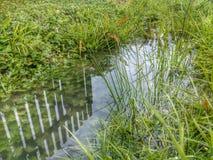 Reflexão na água Imagem de Stock