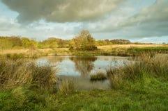Reflexão na água de uma árvore com folhas douradas imagem de stock royalty free