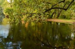 Reflexão na água do carvalho litoral da lagoa velha do parque Imagem de Stock Royalty Free