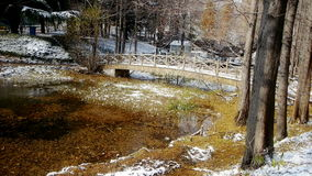 Reflexão na água, licença da floresta e da ponte do metasequoia que flutua no lago, ondinha, neve vídeos de arquivo