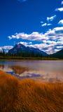 Reflexão na cor saturada das terras molhadas da água Imagem de Stock