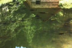 Reflexão no lago Fotografia de Stock
