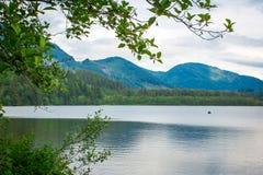 Reflexão no lago Canadá dos cervos Imagem de Stock Royalty Free