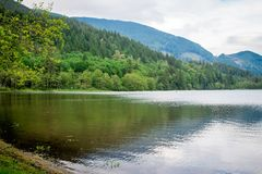Reflexão no lago Canadá dos cervos Fotos de Stock Royalty Free
