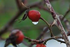 Reflexão no waterdrop Fotografia de Stock Royalty Free