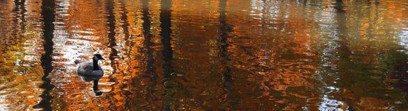 Reflexão panorâmico na lagoa com pato fotografia de stock royalty free