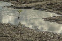 Reflexão pequena da árvore em Punta Jesus Maria, ilha de Ometepe foto de stock