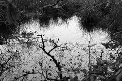 Reflexão preto e branco da árvore fotos de stock