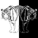 Reflexão preto e branco do tigre ilustração stock