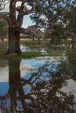 Reflexões Fotos de Stock Royalty Free