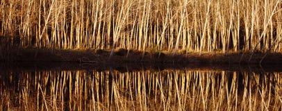 reflexões Foto de Stock Royalty Free