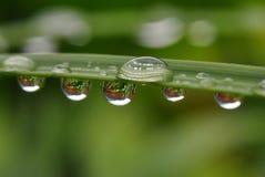 Reflexões ampliadas na gota de água na folha Foto de Stock Royalty Free