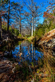 Reflexões bonitas de árvores de Chipre do inverno na angra de Hamilton fotos de stock royalty free