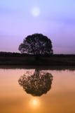 Reflexões coloridas Foto de Stock
