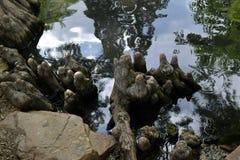 Reflexões da água imagens de stock